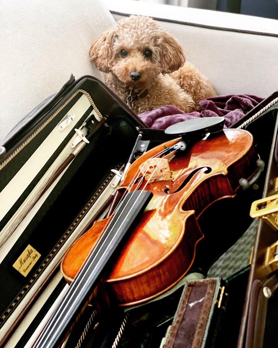 Stradivari opció