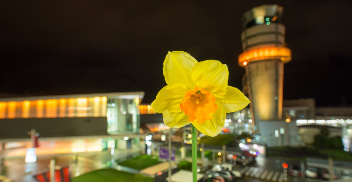 🌼💛 The airport terminal and the @AirwaysNZ tower are lit yellow today to support the @NZCancerSo. 2020 marks 30 years of #DaffodilDay in New Zealand - that's 30 years of coming together to raise much-needed funds to support people facing cancer. https://t.co/iNgb76berS