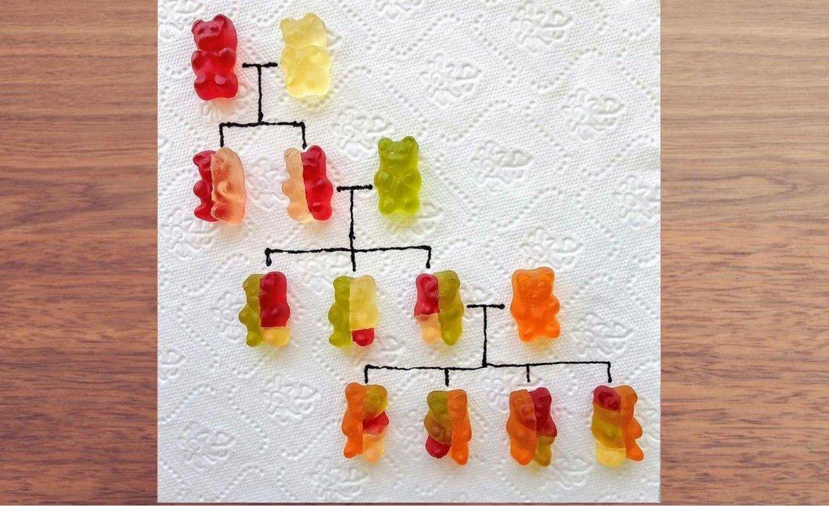 Explaining genetics through gummybears