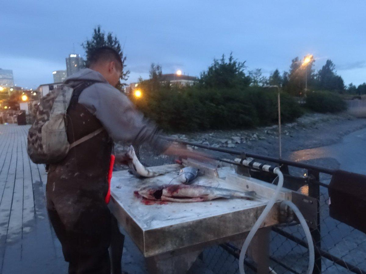 こんな光景初めて見て楽しかったのが #アラスカ #アンカレッジ のサーモン釣り。一応、許可証がいるそうですが、沢山の一般(?)の人が公園の川で釣りを。橋でそのままさばいてるのも斬新。イクラはゴミとなり川に捨てられてました。これで午前0時!#旅行好きな人と繋がりたい #釣り #アメリカ https://t.co/frBVsgvl0x