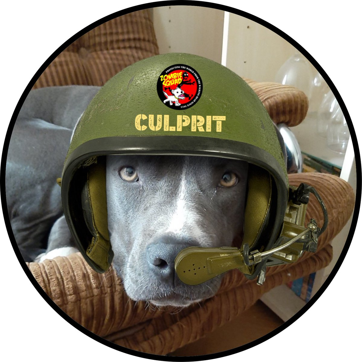 Welcome to #ZSHQ Pvt Culprit @CulpritPitbull we have prepared your patrol kit, bark when you need support from @ZombieSquadHQ https://t.co/u93FBu80M2