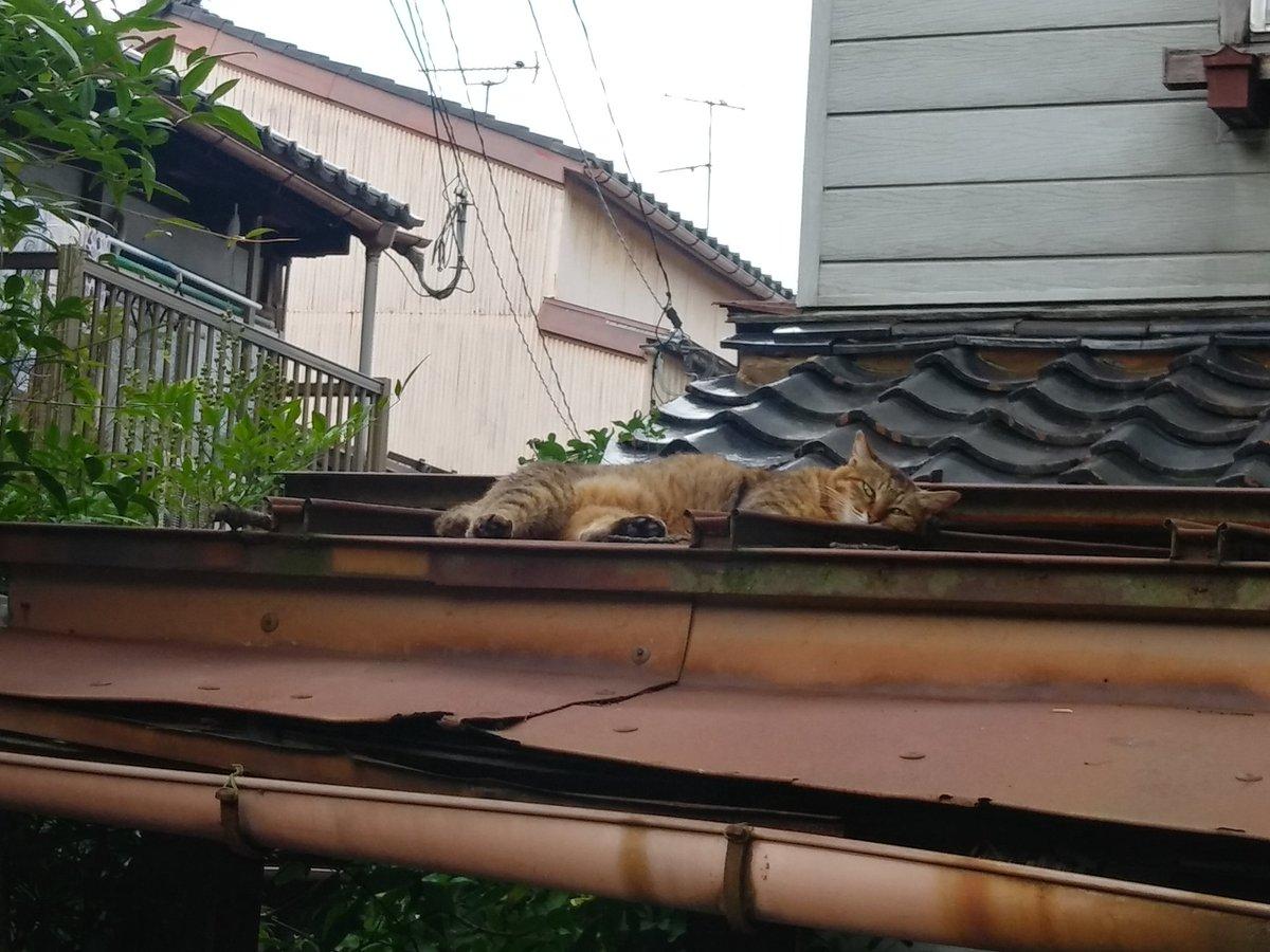 遺品整理を手伝っているお宅の屋根にいた猫🐈