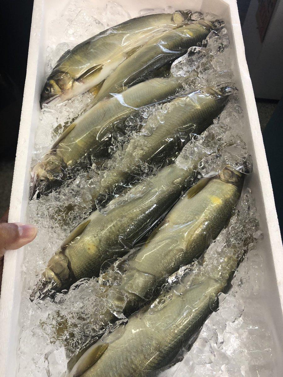 広場 ナルミ 杉本 魚 ナルミ 杉本