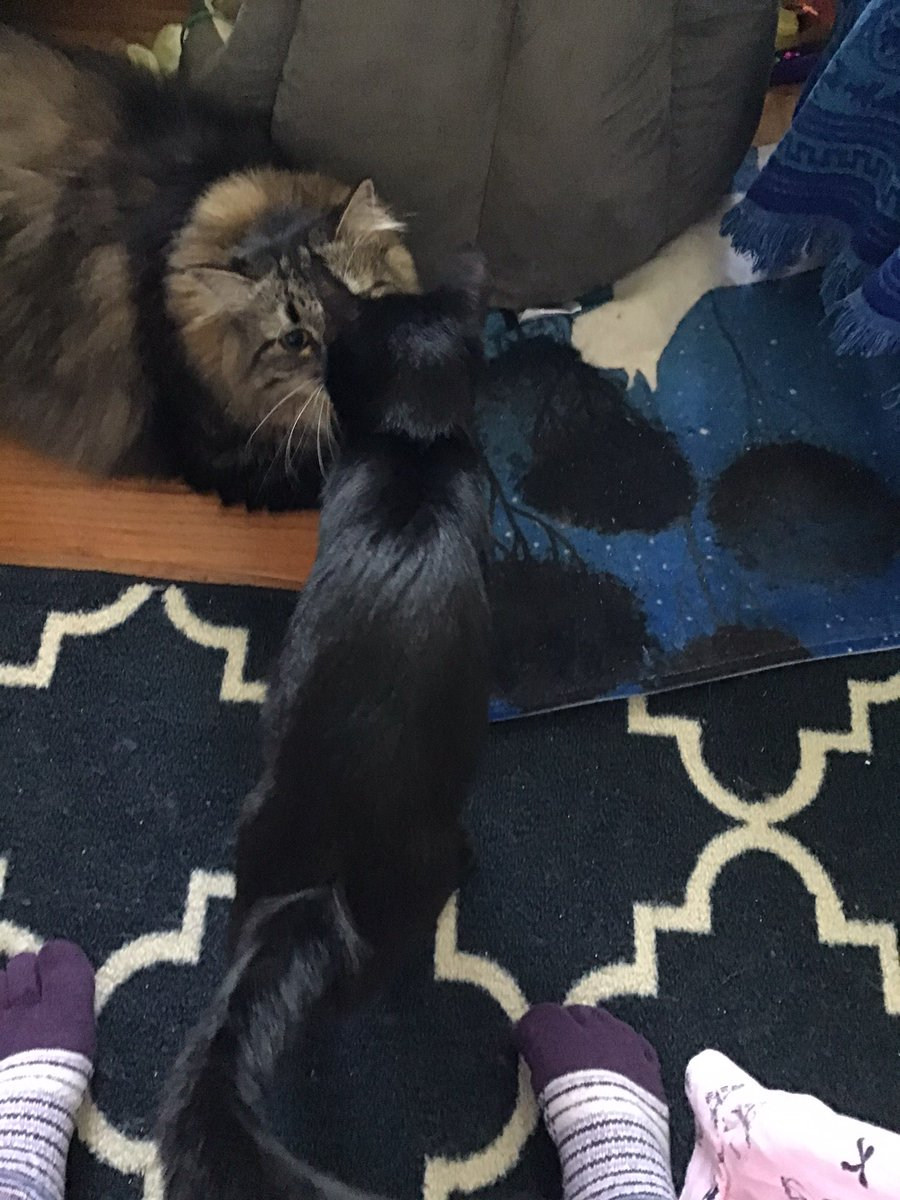 @TheCatMalice @toby_rules1 @yongmaylingjen1 @LittleMaineCoon @mitsy2714 @MaineCoonCatsOH @JusticeToAll @JoyOfCats @GeneralCattis @BerylCoon @CoonGriff @HugoStevens15 Kisses and cuddles to mew Malice, Phantom and Pandora. Hugs to Momma Deana 😻😻😻❤️❤️❤️🤗🤗🤗 https://t.co/MEFQUZCG6M