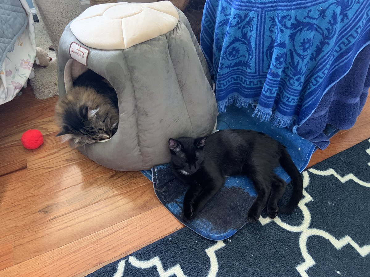 @JusticeToAll @toby_rules1 @yongmaylingjen1 @LittleMaineCoon @mitsy2714 @MaineCoonCatsOH @TheCatMalice @JoyOfCats @GeneralCattis @BerylCoon @CoonGriff @HugoStevens15 Sweet dreams beautiful Heidi We is napping too Happy #Caturday https://t.co/6oqsZDwU7j