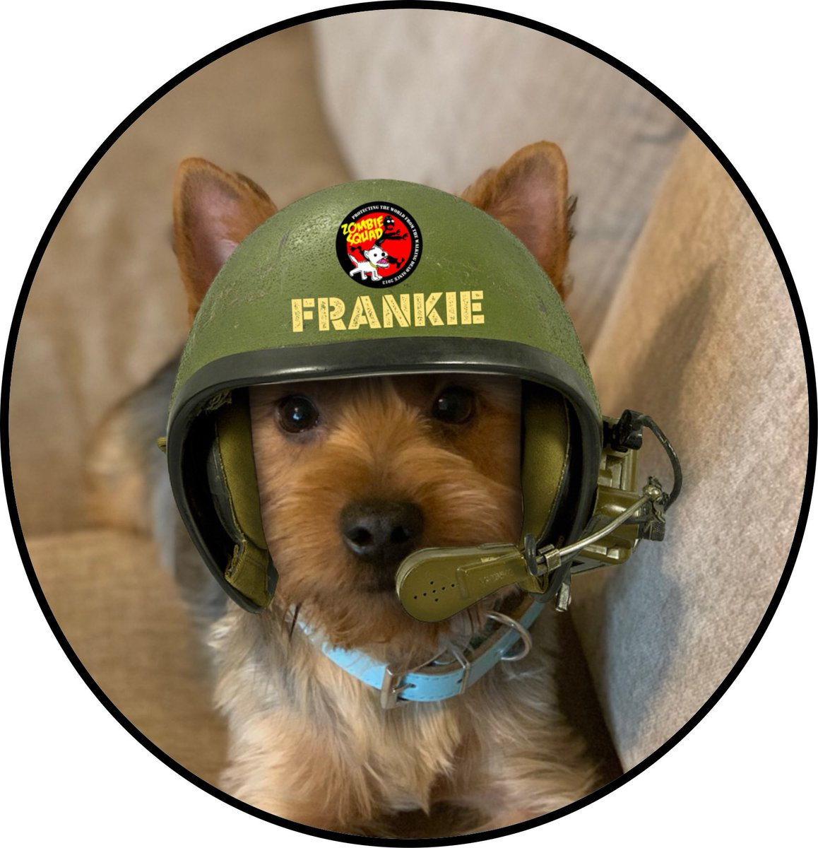 Welcome to #ZSHQ Pvt Frankie @frankie_yorkie we gave prepared your patrol kit, bark when you need support from @ZombieSquadHQ *salutes* https://t.co/MdKLBXMKhb