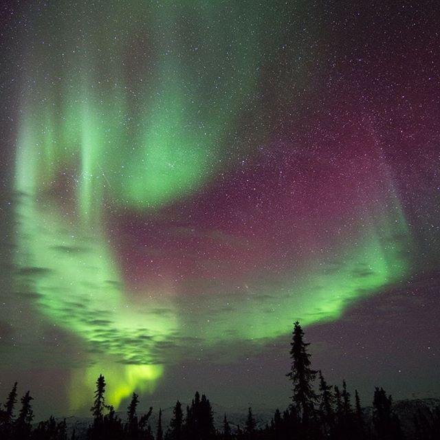 "Wish upon Auroras! The power, the magic 💚  Reposting @bonniecatonphoto: ... ""Aurora, seen at Chena Hot Springs, near Fairbanks, Alaska.  #Aurora #northernlights #Alaska #wow #naturephotography #nature #night #stars #chena #chenahotsprings"" https://t.co/8QGfdqNq1h https://t.co/kLIvpKvKgK"