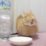 満足そうなお顔のウサギさん。バナナを食べると日本一幸せになるようです!