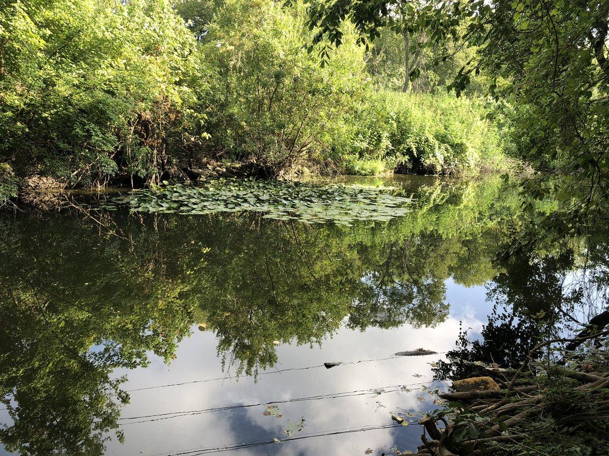 Salado Creek Greenway, nature endures (we hope)... https://t.co/V9yprWLhGR