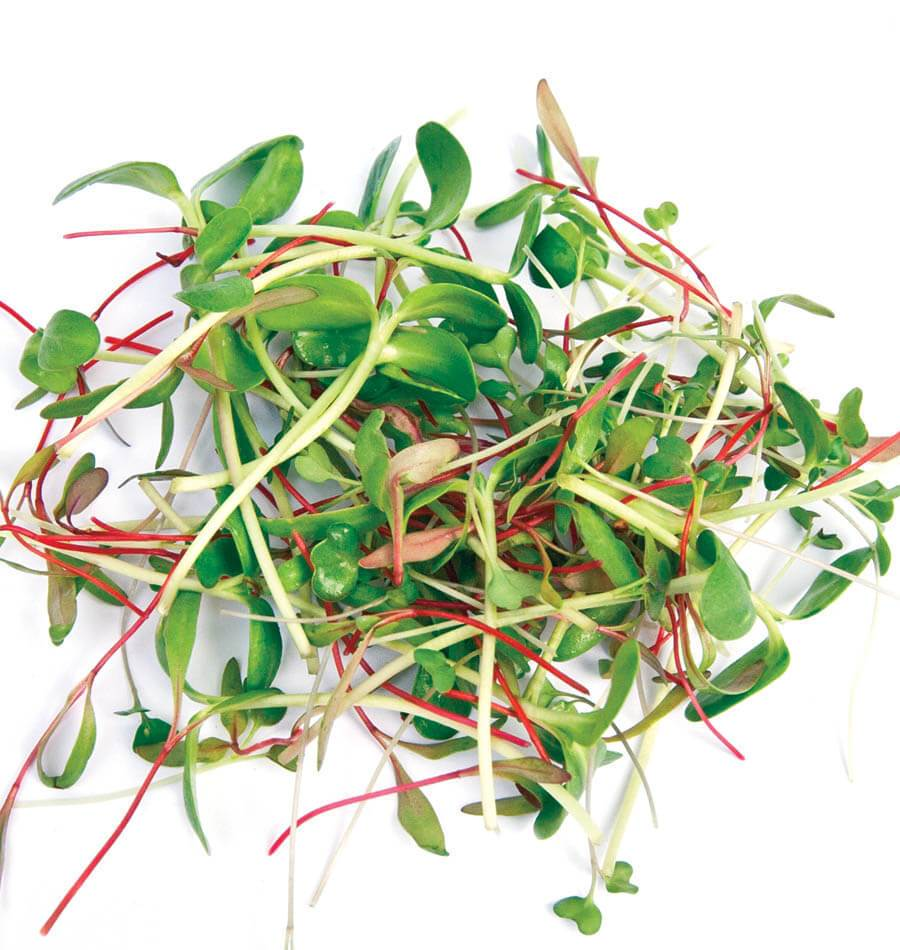 Learn how to grow microgreens from seed, and you'll have an unlimited supply of fresh, nutritious, and tender salad greens. Microgreens can be pulled from the soil and rinsed until all the soil particles have washed away.  https://t.co/0pT6RK9R1Y #westcoastseeds #microgreens https://t.co/5PfTyHAvRi
