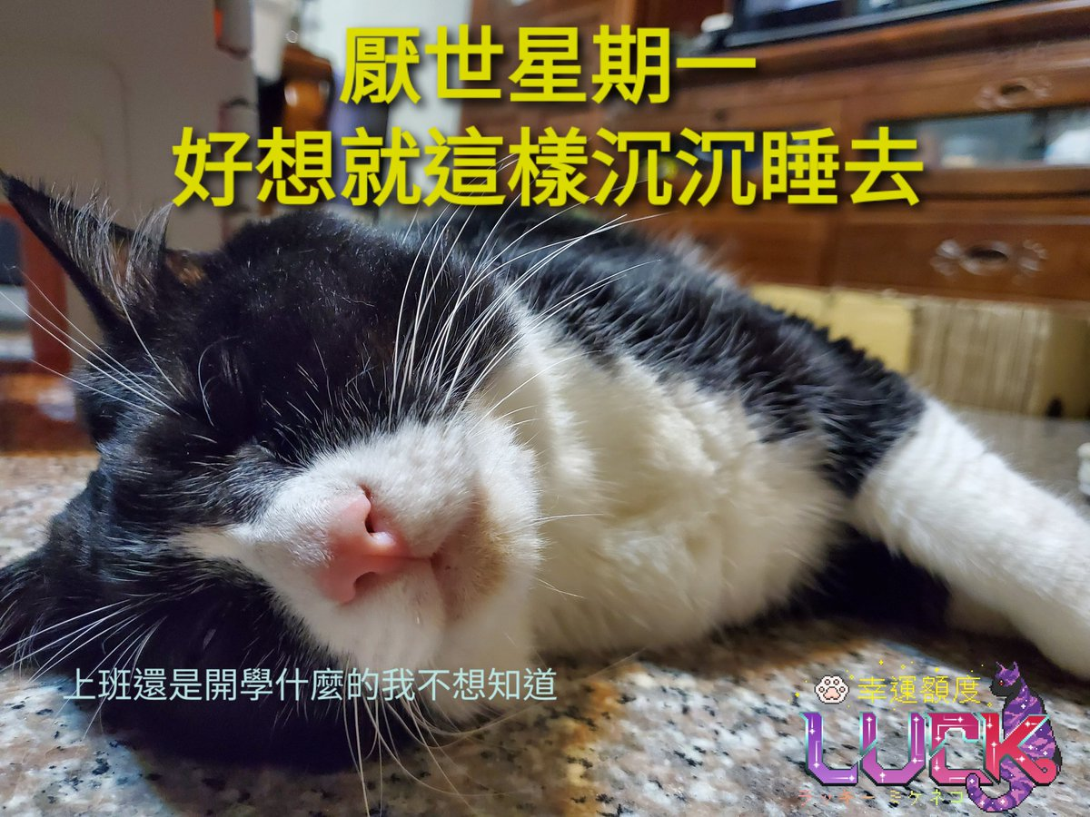 blue Monday です。 出勤とか授業とか知りたくない😴😴 #幸運額度 #cat #taiwan #猫 #猫好きさんと繋がりたい #猫好き #猫写真 #猫のいる生活 #インスタ映え #貓 #台灣 #台湾 #REO #レオ #ハチワレ #ハチワレ猫 #賓士貓 #Tuxedo #雷歐 #bluemonday https://t.co/MuipGR9eR9