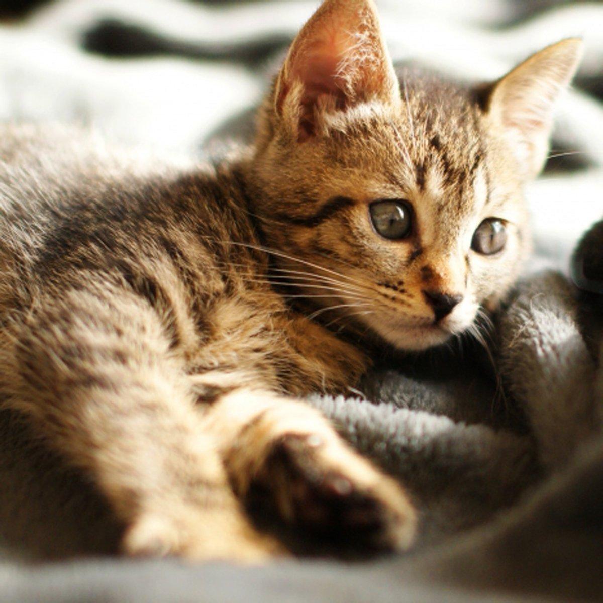 かわいいにゃんこ♪ #ハニーペット #HONEYPET #honeypet #猫 #ねこ #ねこ部 #にゃんすたぐらむ #にゃんこ #子猫 #ネコ #ねこのいる生活 #ねこのきもち #ねこのいる暮らし #kitty #catstagram #petstagram #instacat #meow #instagood #follow #followme https://t.co/eEck8rwMQC