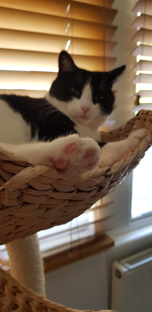 I did this for #ToeBeanTuesday mum is pleased with me😻 https://t.co/agNdpyp0KZ
