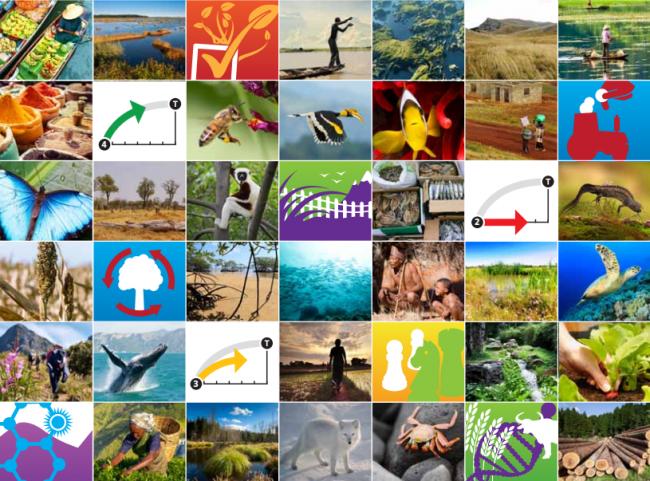 🌲Terres & Forêts 🌾Agriculture 🍲Alimentation 🐟Pêche & océans 🏥Villes & infrastructure 🦀Eau douce 🌊#ActionClimat 🌐Écosystèmes sains  @UNBiodiversity souligne l'importance de la biodiversité dans la lutte contre le changement climatique. https://t.co/DSZS8mgVum via @IPBES https://t.co/h0OCOjruz8