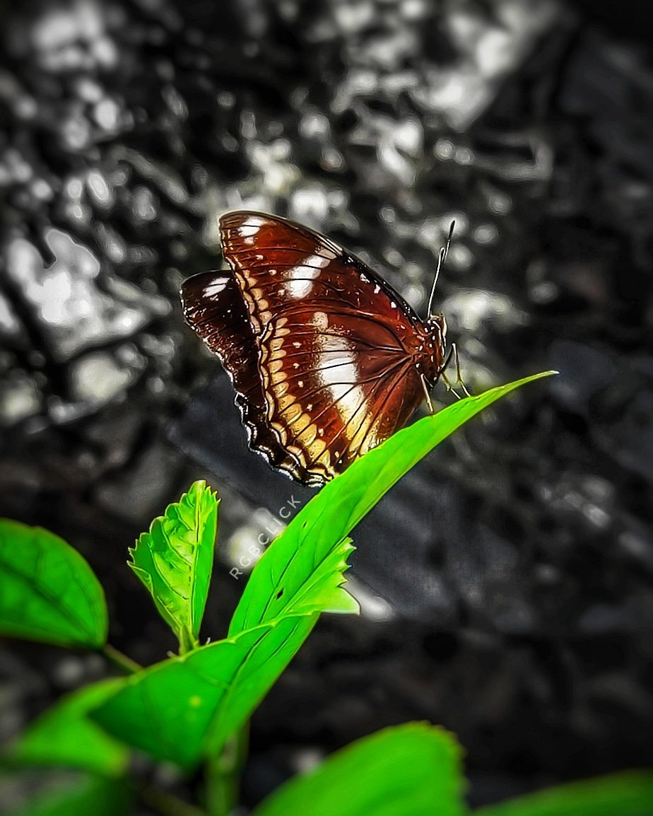 🦋 . #jaihind🇮🇳 #shotononeplus #rgbclick #createathome #naturephotograpy #butterfly #insectsphotography #manualfocus #PicOfTheDay #gqview #natgeowildlife #natgeoyourshot #natgeoadventure #Viewpoint #viewofnature #gqview #NakedPlanet Do Follow on Instagram: https://t.co/cITcuopMQL https://t.co/EEABLjmAo1