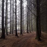 Image for the Tweet beginning: This forest is on Rombalds