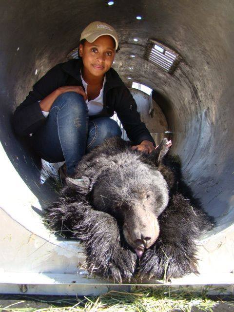 Hi! I'm Dr. @raewynngrant. I am a large carnivore ecologist, @NatGeo Explorer, #scicomm creator, & storyteller. I study the movement and behavior of bears and lions in areas with increasing human activity. https://t.co/Pfn0mqQzHO