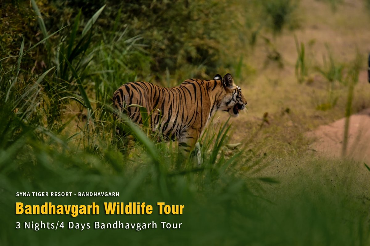 3 Nights/ 4 Days Wildlife Tour to Bandhavgarh  Check out the complete itinerary here : https://t.co/dulzTn5E9t  #Bandhavgarh #Wildlife #TigerTour #MadhyaPradesh #WildlifeTour https://t.co/VqFJq2SdP1