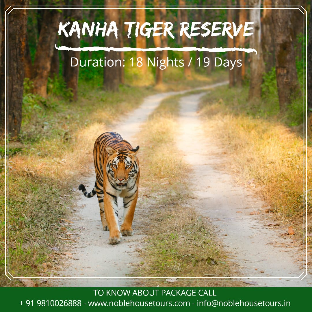 Book now our amazing 19 days kanha Tiger Reserve Wildlife Tour at a reasonable price. https://t.co/c2qefzOlmg  #noblehousetour #travelpost #kanhatigerreserve #wildlifetour #wildlifeindia #tourist #traveler #travelholic #traveladdictb #placestovisit #traveldestinations https://t.co/h6CA6FLhP9