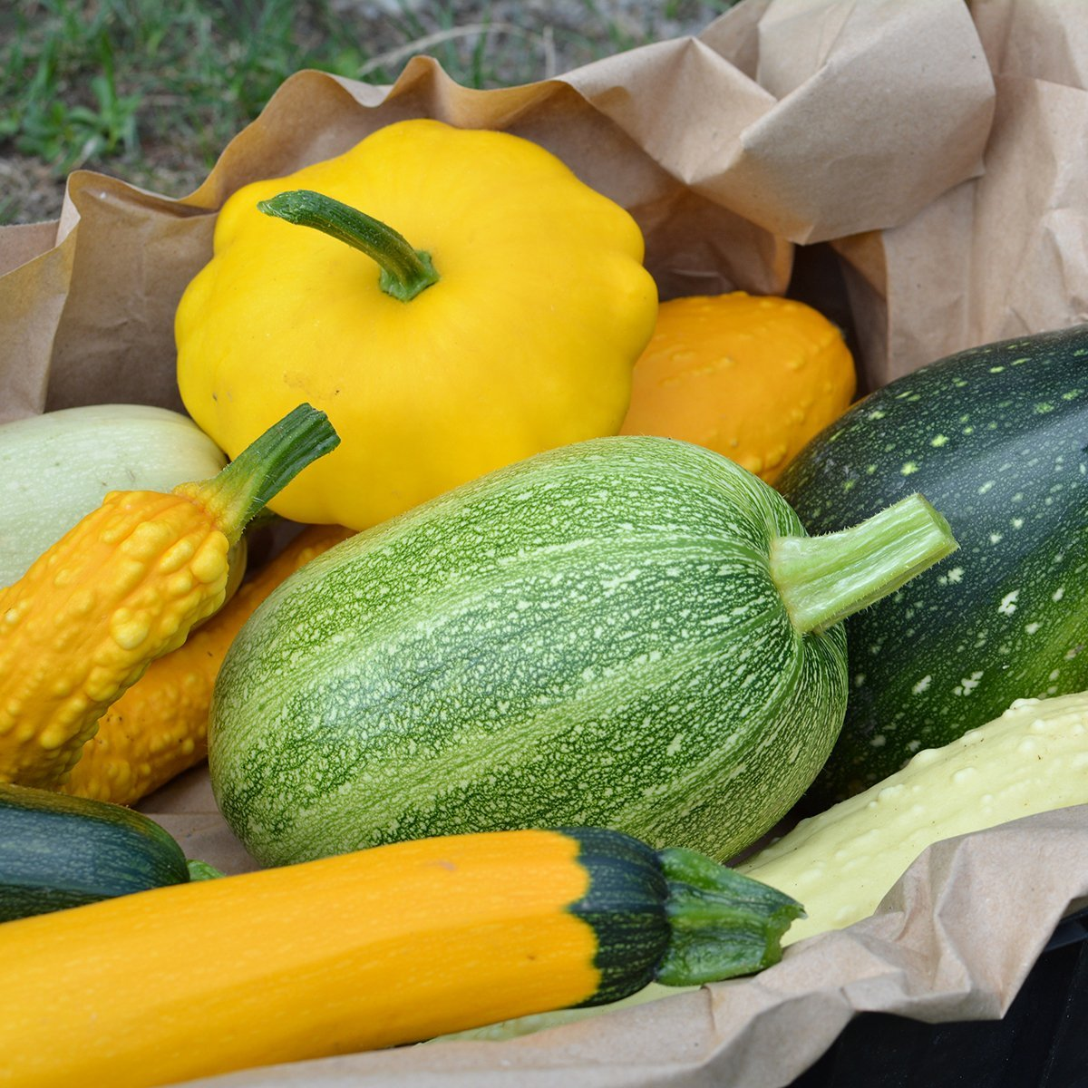 #GreenLiving is back from #Summer break, and #AlexArcher will be talking about #SummerSquash!  #EatHealthy  #LiveHealthy  #BeHealthy  #EatRealFood  #EatGoodFood  #HellNoGMO  #NoFrankenfoods #NonGMO https://t.co/W31Pagnll4
