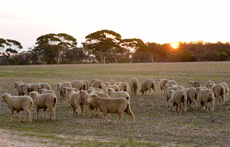 Farmers in the greater Carrolup area! #Katanning Join #landcare and your neighbours 8am this Thurs 17th Sept to create a project application, for the Smart #Farms Small Grants program-up to $100,000! Contact ella@katanninglandcare.org.au or Bev Kowald https://t.co/kJoxO9ao2C