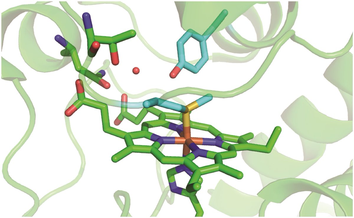 """🔥 New advance article for RSC Chemical Biology! 🔥 Gianantonio Battistuzzi et al @UNIMORE_univ exploring how """"Met80 and Tyr67 affect the chemical #unfolding of yeast #cytochrome c: comparing the solution vs. immobilized state""""  🧐 #openaccess CLICK 👉 https://t.co/eOhIN6Rg0D https://t.co/lmK5TwWvim"""