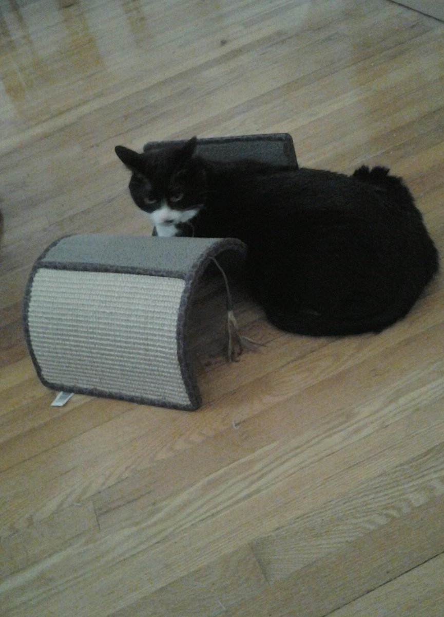 Happy #KittyloafMonday from my scratcher with my #AirplaneEars everyone! 💝 Have a pawsome day! 😹 Stay safe and healthy 😷 😷 😷 #TuxiesRule! #TuxieGang! #CatsOfTheQuarantine! @TribeOfMa @MightyMolasses @PoppyTuxedo @lucytuxedo @nesjloch @RosieRoseLA @TobiasandJasper 🎉 🎉 🎉 https://t.co/QN4gl3CHaO