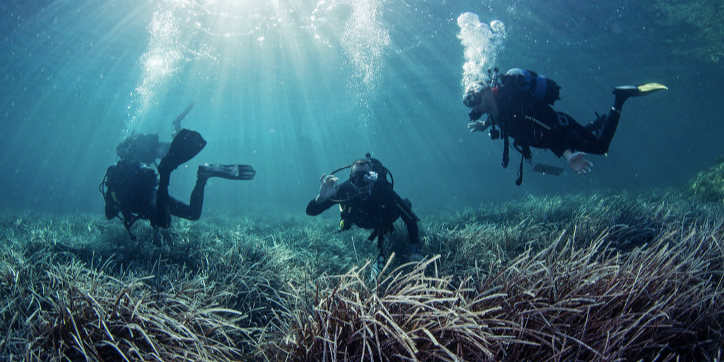 Citizen scientists can contribute to conservation by helping to conduct research that might not be feasible without volunteer time and effort. This report explains how citizen science is important for seagrass protection (see pg. 56): https://t.co/AoGL7OY7Vq 🌿 #seagrass https://t.co/ICWU0WtBaW