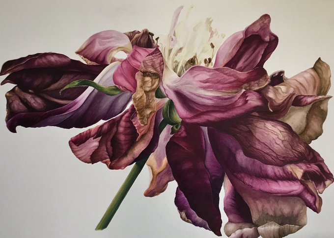 Anna Dowd, contemporary UK botanical and natural world artist and Society of Botanical Artists Fellow #womensart