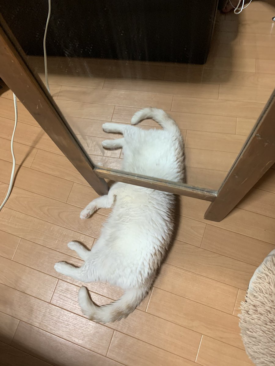 うちの猫が鏡の下で寝てるせいで凄い事になってるwww