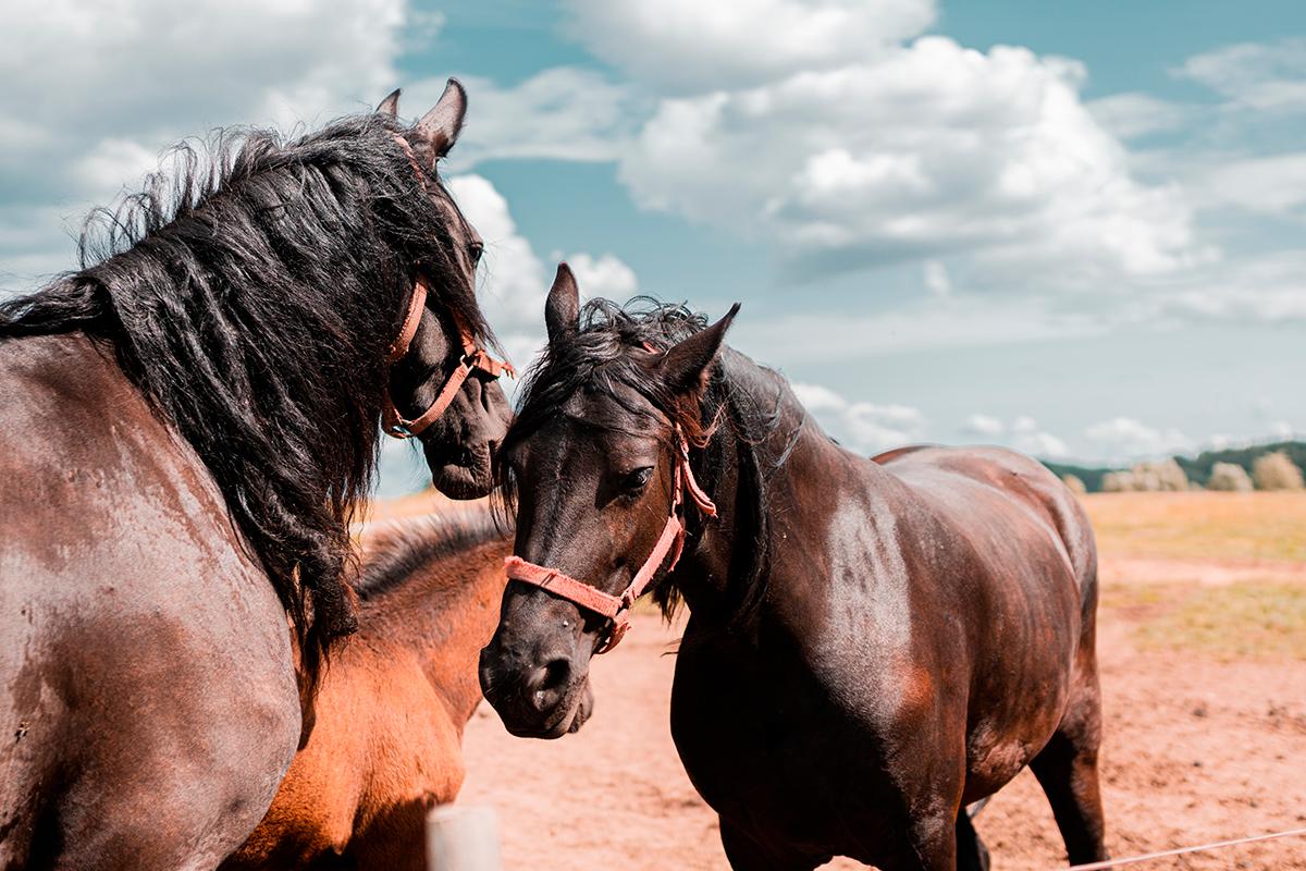 🐴💨🌫️Arturo, me he enterado que viene mal tiempo, ve preparando tus redes slow feeders. https://t.co/oT5HpEKpLZ #caballo #horse #equino #ecuestre #portoverde #lareddemicaballo #redesheno #heno #forraje #slowfeeding #redesparaheno #verano #vacacionesenfamilia #slowfeeder https://t.co/vU578TFaCs