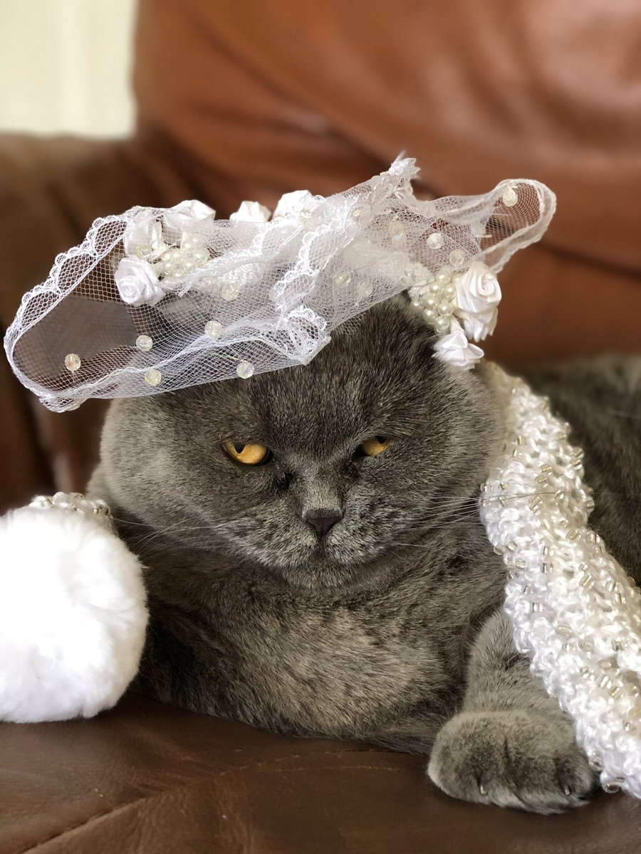 In the upcoming Cat Magazine, we're doing a big feature on the kitty #WeddingOfTheCentury including a 'photo page' of special guests! A huge thanks to all who we included!… https://t.co/yLDV1SaiMK