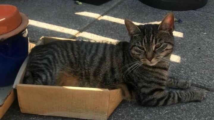 Cat baby Smudgey went #Missing at 9-20am on 1st September 2020 from Hillcrest #BarHill #Cambridgeshire #CB23. She ran away from loud building work in the neighbours garden  and never cane home. She is a nervous 2 year old #Neutered & #Chipped #Tabby.  https://t.co/dpG1vq1yYM https://t.co/PVaBXzan87