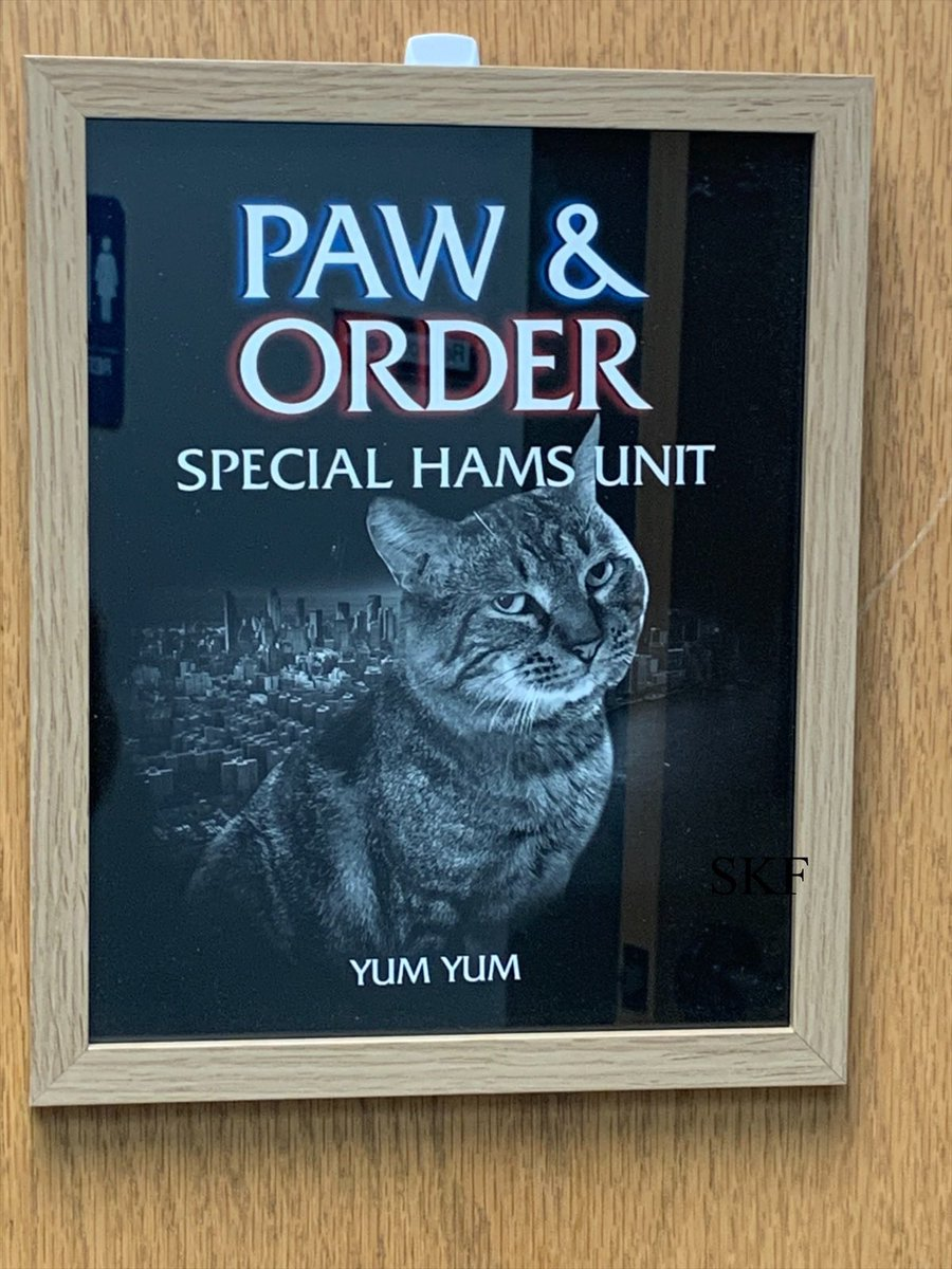 Skittles: The Big Guy just got this in for his office door, now whenever he has the door open his co-workers and visitors will be able to see Stray and His Legacy will live on. 🌈💖 @StrayLiotta @livingroomlions  #MondayMotivaton  #StrayStrong  #Hamsbassador  #LeaveaCan https://t.co/EMZrFAX240