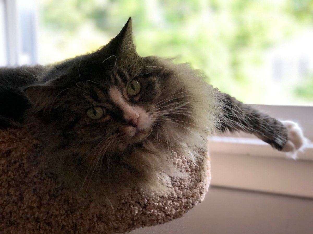 I'm enjoying the breeze here this morning, watching Mommy while she works. How's everyone doing today? @Cleo_sMommy @MaineCoonCatsOH @JusticeToAll @Wxgirl169 @BaggaleyLiz @GeneralCattis @BengalPandora @yongmaylingjen1 @lucymusiccat https://t.co/Gm6gV0ImGb