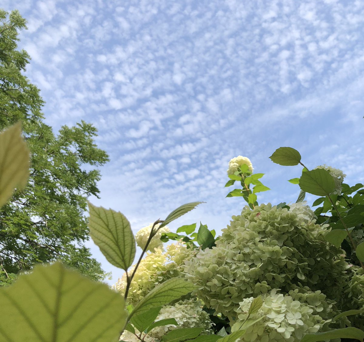 """Light tomorrow with today."" Elisabeth Barrett Browning   #Inspiration #Spirit #Sublime #BePresent #Beauty #BeLight #BeHappy #Grateful #Abundant #Blessings #BeautifulWorld #4ALL #InfiniteLOVE https://t.co/ACAC1gLpHA"