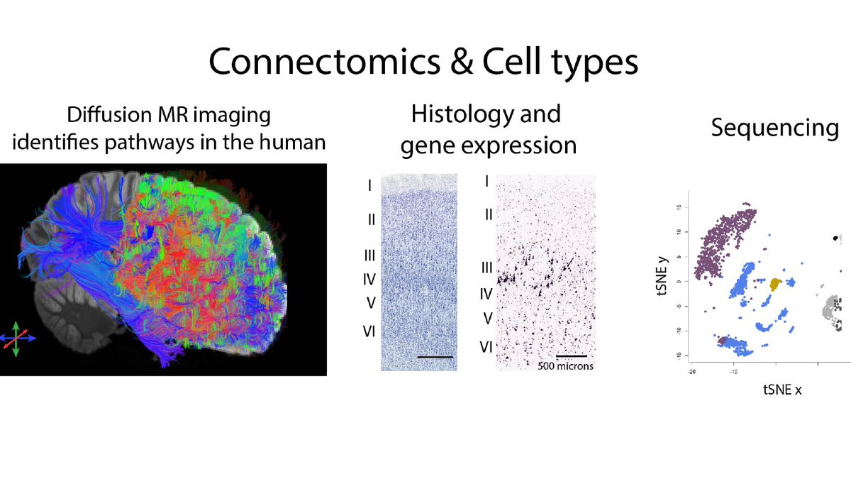 The Charvet lab website is up! We are integrating neuroimaging and gene expression to study the evolution and development of neural circuits. Here it is! https://t.co/vbLfdWepkc https://t.co/ldDcvfw2rP