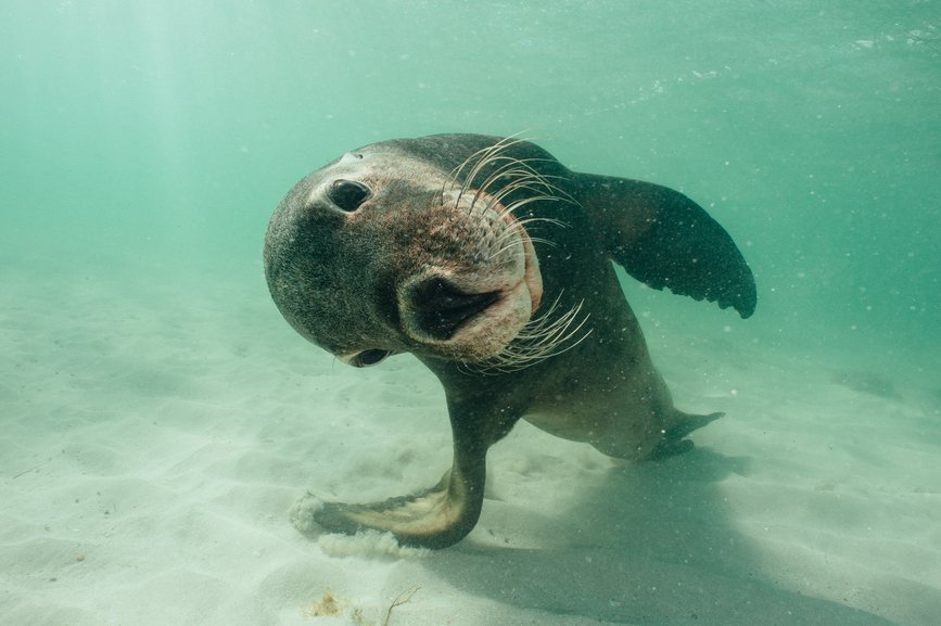 For the sake of this cute sea lion, please keep our beaches clean! #thirstyforchange #SaveOurOceans