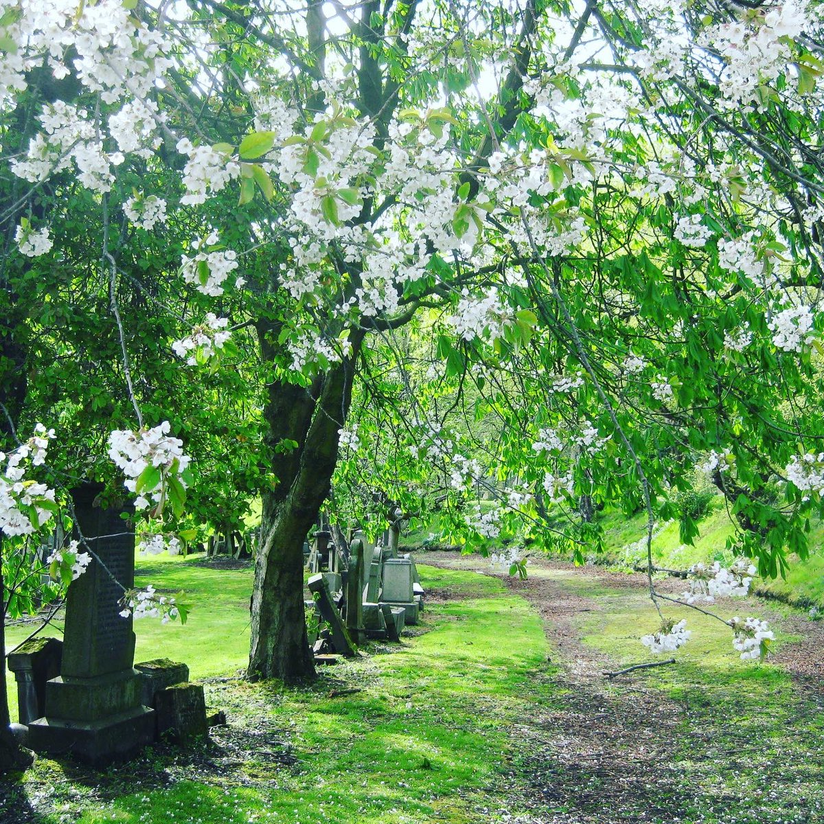 Who said #cemeteries can't be beautiful?  A few shots of my favorite place to stroll through in #Glasgow: the #Necropolis.  #VisitScotland #DiscoverScotland #Scotland #ScotlandIsNow #LoveScotland #PeopleMakeGlasgow #ScotSpirit https://t.co/F63DlijmWQ