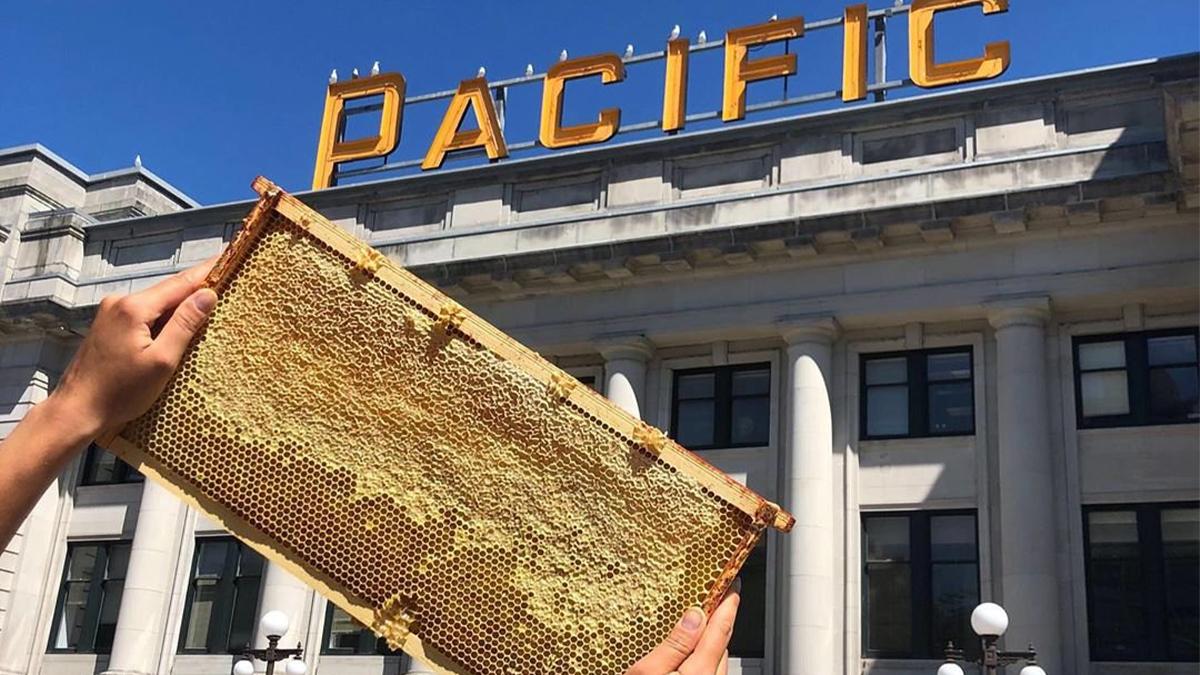 Des ruches installées sur les toits de 4 de nos gares ont produit plus de 800 pots de miel grâce au travail des abeilles et d'@alveolebuzz, entreprise qui cultive l'intelligence écologique des citadins en les sensibilisant à l'importance des abeilles. 📷IG: etiennelapierre 🍯🐝 https://t.co/2PeJqVarXI