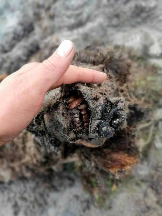 In Siberië is een compleet intacte holenbeer gevonden. Die zijn al 15.000 jaar uitgestorven! https://t.co/CdBNkvxmsm https://t.co/VAojPbcYbl