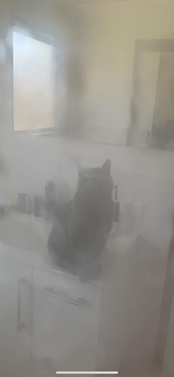 Pervert ... 👀  #cats #catsoftwitter https://t.co/5AVLZiNv7Z