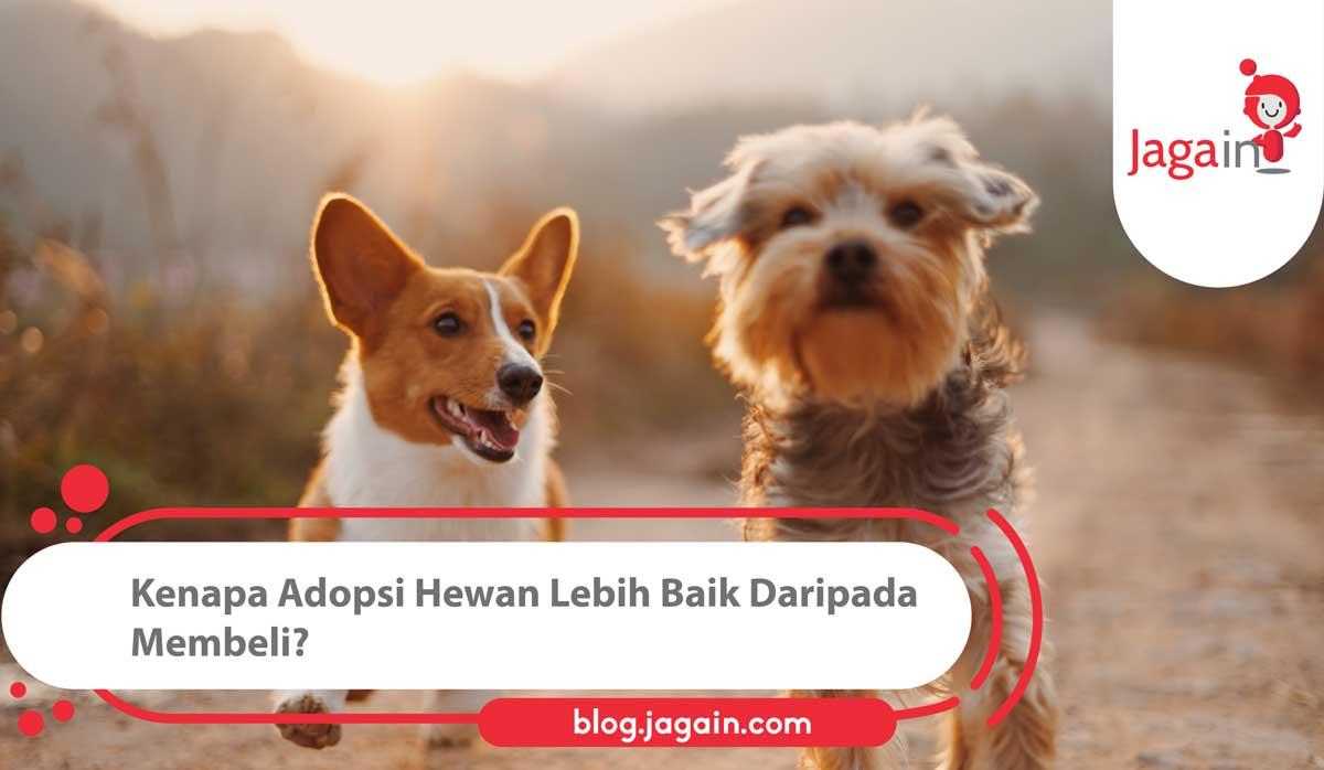 Hi sobat Jaggers! Kalo mau punya hewan peliharaan, jangan lupa untuk mempertimbangkan adopsi yah! #AdoptDontShop   https://t.co/7W9xhDAYcC https://t.co/dl1FwOJMOm