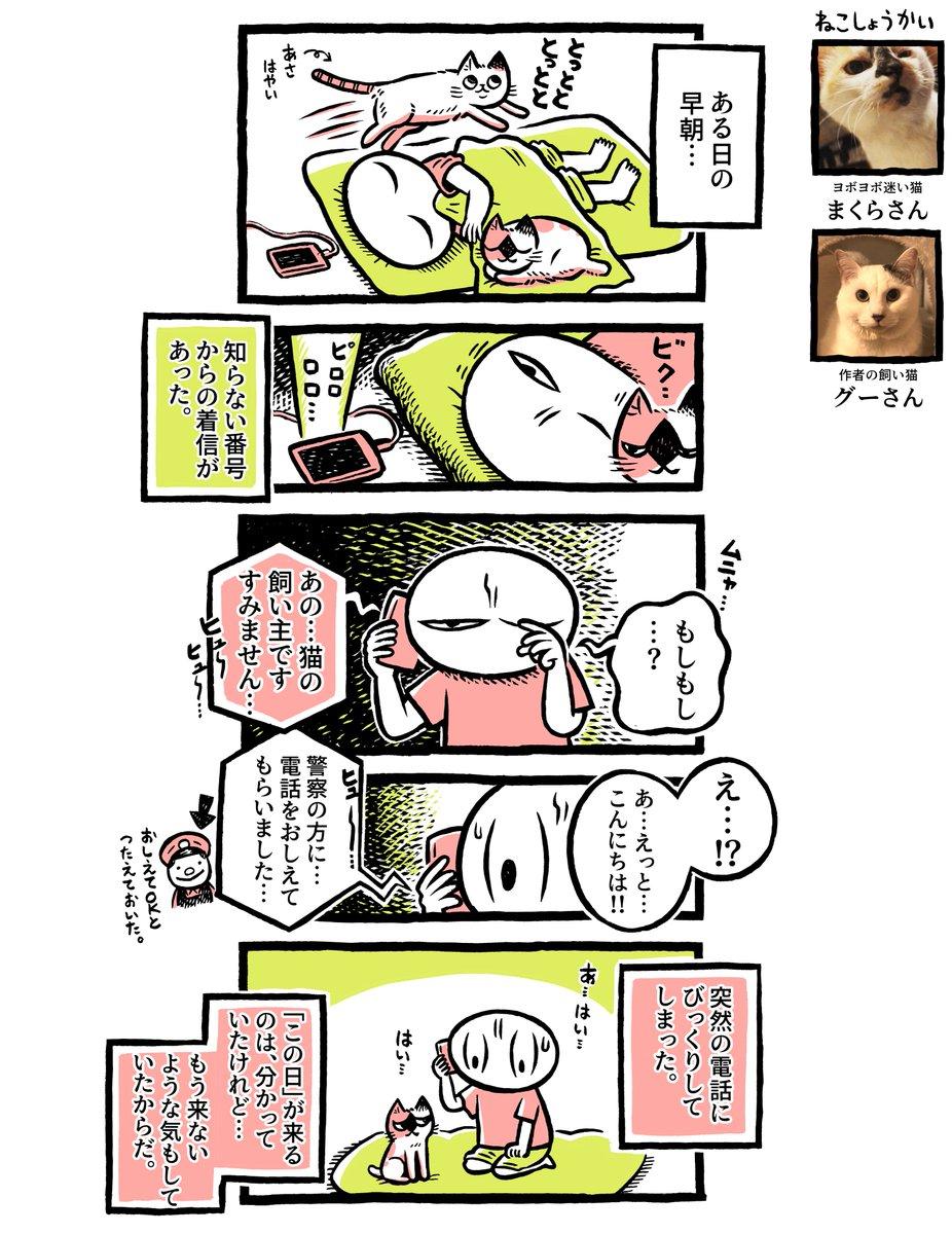 ヨボヨボの迷い猫を保護したら…飼い主からの連絡【14】