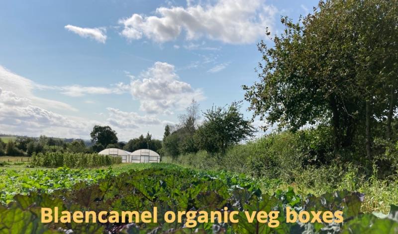 September veg boxes - https://t.co/f44bUccgE9 This weeks veg box newsletter #OrganicSeptember #vegboxes https://t.co/HsMYzaHRWx