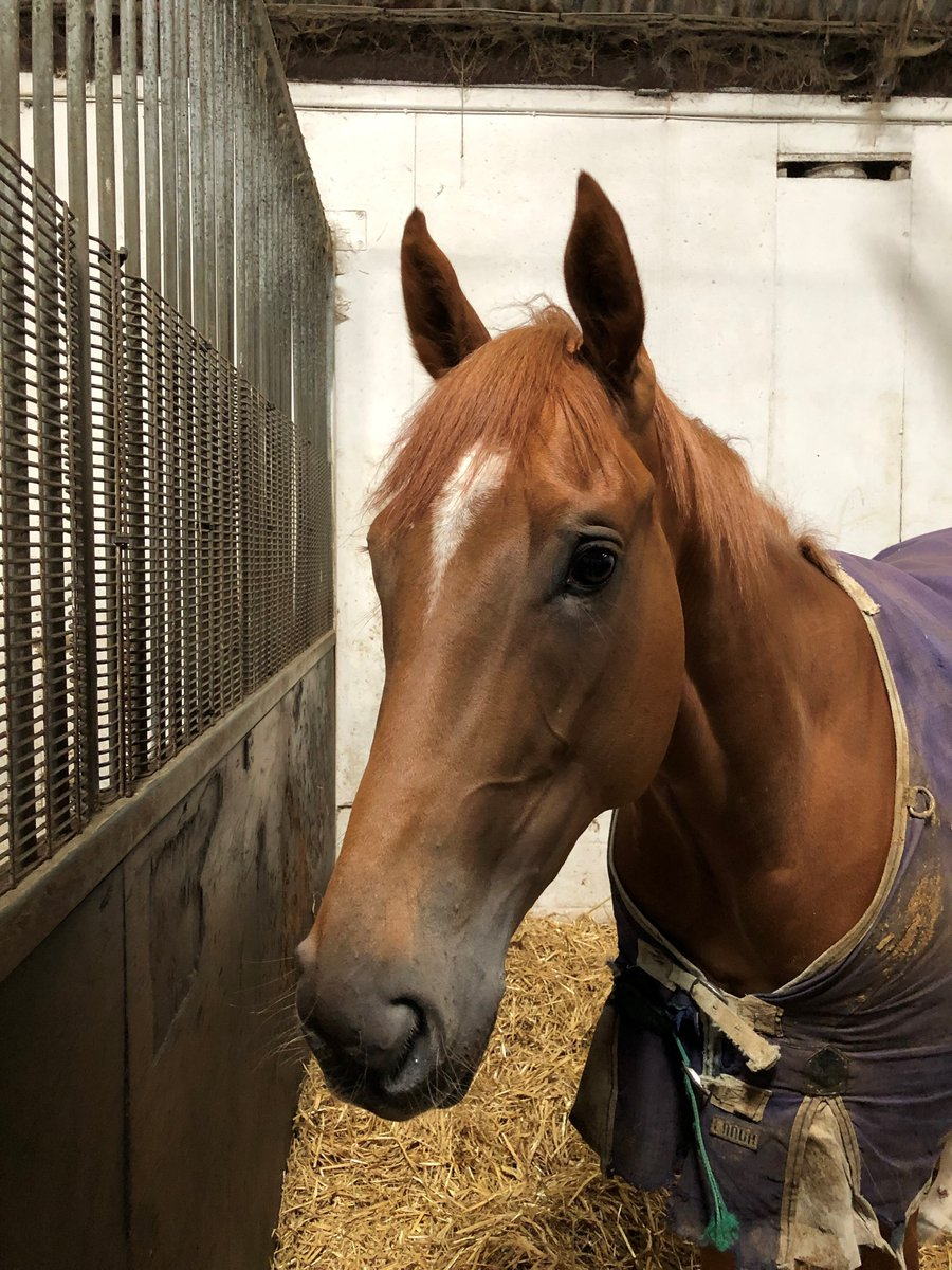 Five runners today - all at @Redcarracing. Madreselva (pictured), Time For A Good Un, Twist of Hay, Worden Park, and Meccas Hot Steps head to the seaside. Good luck to connections.