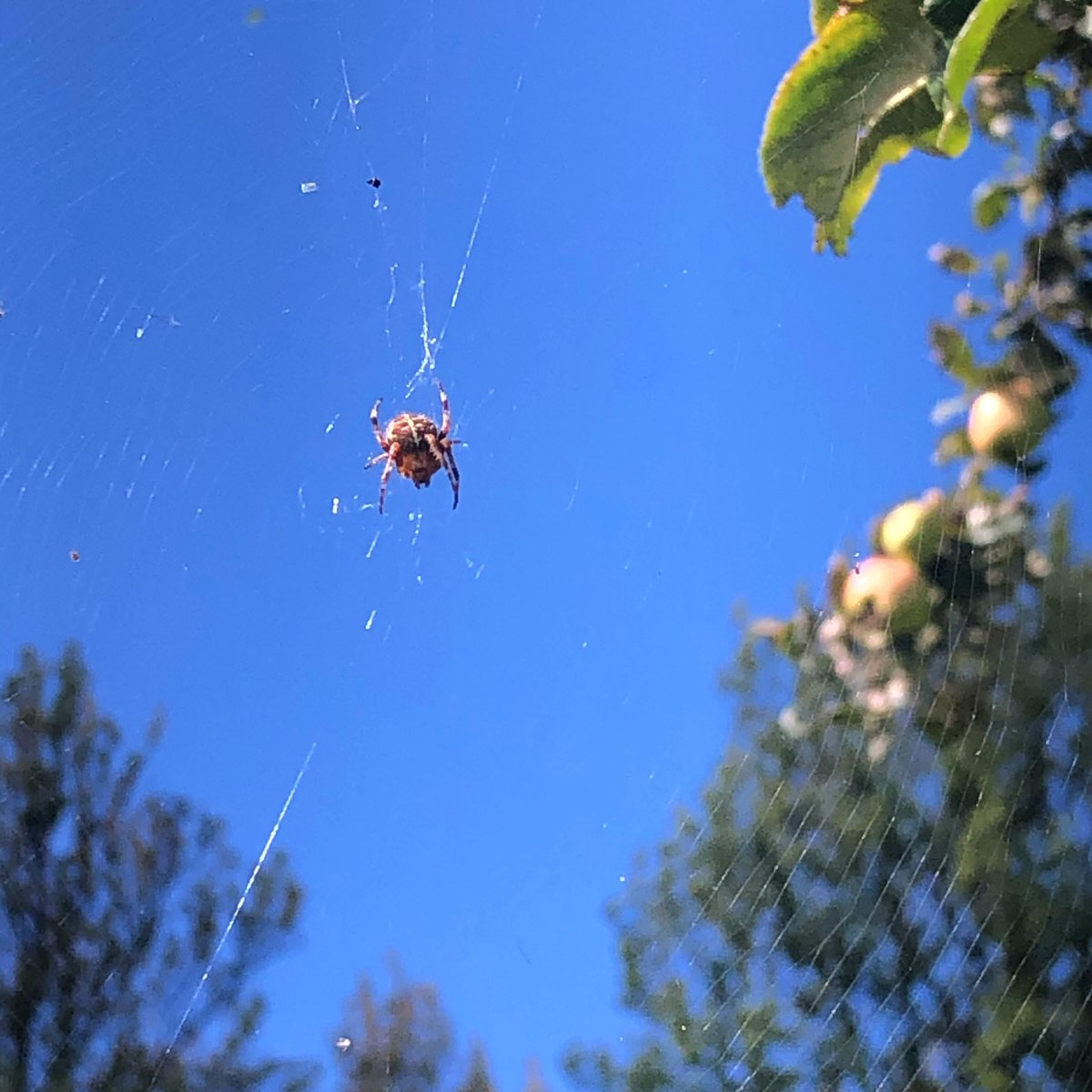 Made an apple picking friend🕷If you haven't heard already we have an orchard full of apples that need picking and taking home! ⠀ ⠀ Pick up a bag from our courtyard for £1.50 and fill with apples from over 100 different varieties - Enjoy!🌞🍎⠀ https://t.co/UioTebWoRH
