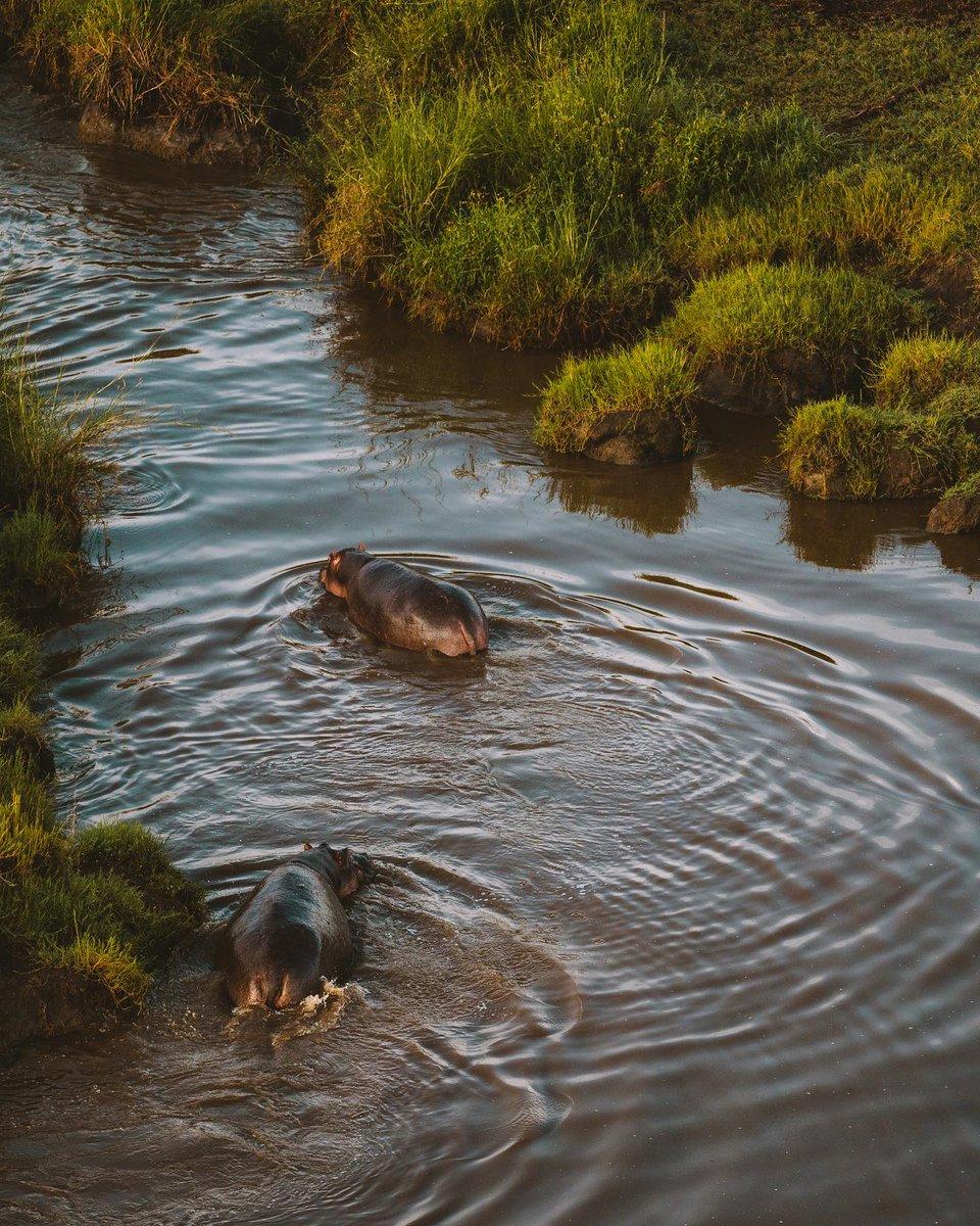 Tuesday morning on the river. Unbeatable wildlife experiences in Tanzania await your arrival.  #Serenambuzimawe  #serengeti  #Tanzaniaunforgetable https://t.co/8u2nXCSmeL