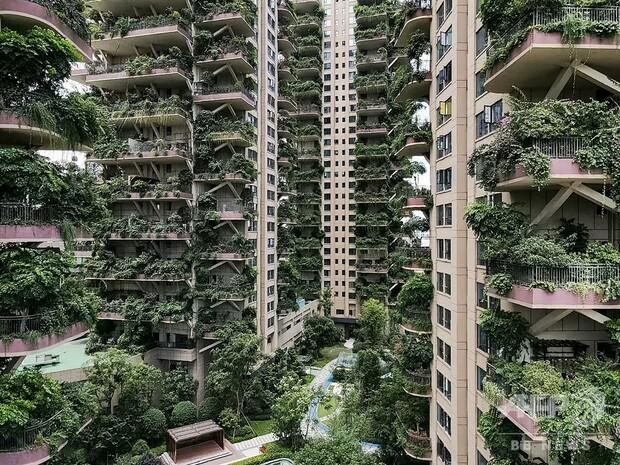 【退廃的】緑あふれる集合住宅、蚊の来襲でほぼ無人に 中国「階層的な森林」をウリにしていたこの集合住宅は、蚊の来襲が原因でほぼ無人に。放置されたベランダが植物に覆われてしまっている。