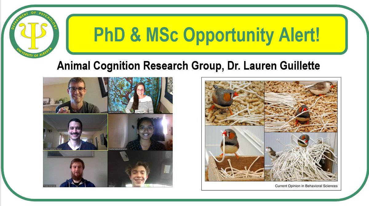 The Animal Cognition Research Groups lead by @laurenguillette is recruiting fully-funded PhD & MSc students to start Fall 2021. Both Canadian & international folks, women, & those from underrepresented groups encouraged to apply.  https://t.co/yGHPym8X3x https://t.co/uREryUoAjH https://t.co/zcXmIIAs2c